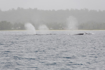 Group of 7 whales
